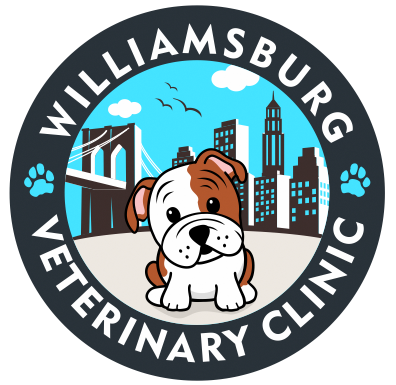 Veterinarian In Brooklyn | Near You | Williamsburg