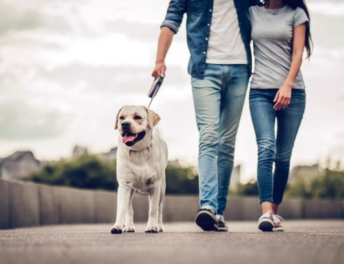 Pet Planning for the New Year: 5 Resolutions for Pet Owners