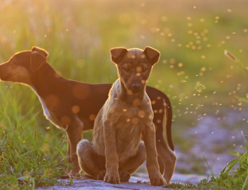 Does My Pet Need Heartworm Prevention?