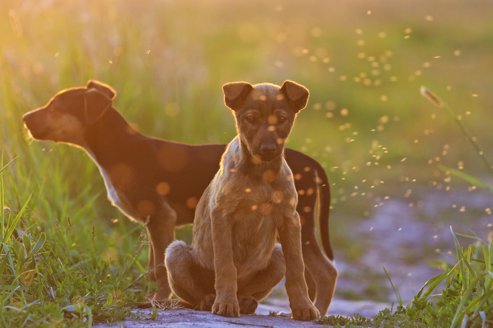 Does My Pet Need Heartworm Prevention? - Vet In Brooklyn