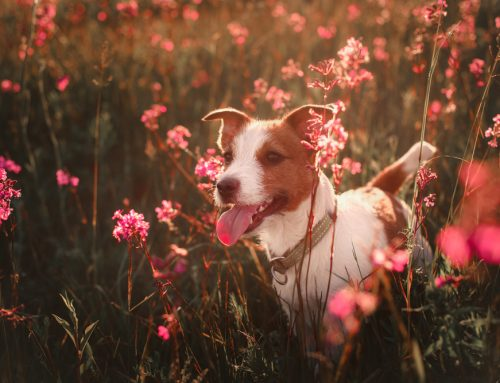3 Common Pet Allergies