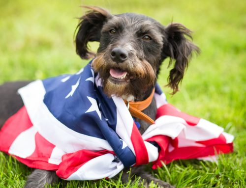 Pet Owners' 5 Most Common Fourth of July Mistakes